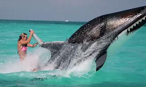 einmal auf dem weissen hai reiten